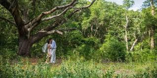 Jacksonville arboretum gardens jacksonville hot spots - Jacksonville arboretum and gardens ...